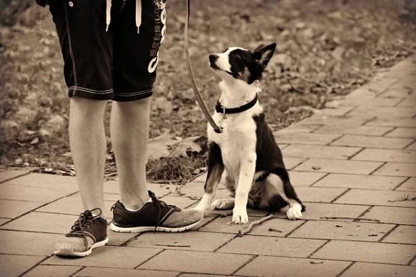アメリカ発、犬の散歩代行サービスアプリでのトラブルの話