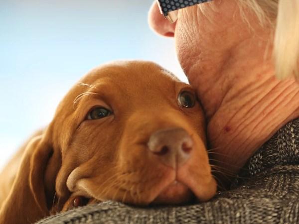 ペットと飼い主の高齢化問題~高齢者が犬を飼うということのに対する反応