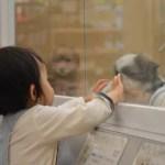 ペットショップでの生体販売は虐待なのか?みんなの意見をまとめてみた