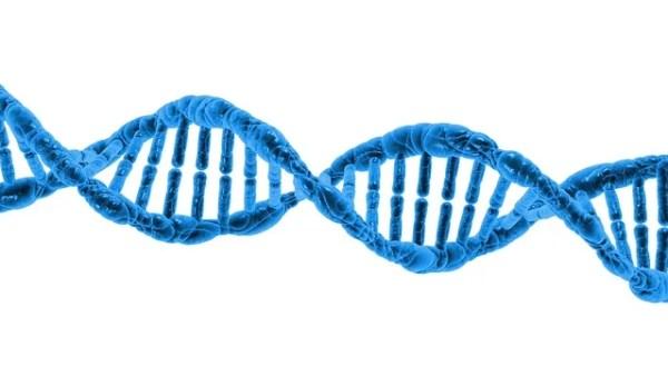 先天性疾患・遺伝性疾患では対象外になるペット保険会社がある