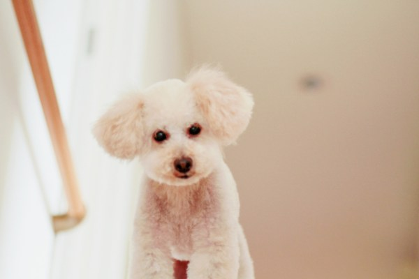 一番注意しなければいけないことは愛犬の目を離さないこと