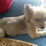 保護犬を譲渡会で引き取り里親になった実話~野良犬から生まれたカワイイ子犬