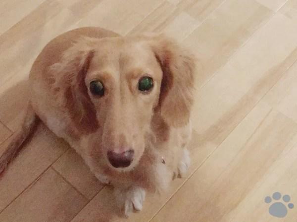 犬を飼い始めて初めての後悔や失敗談~アドバイスも含め参考になる実例6選