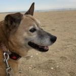老犬のセカンドオピニオンや治療費の問題~シニア期を豊かに過ごす最善策