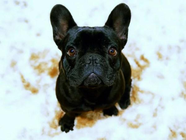 私が初めて犬を飼った時からの気持ちの変化~愛犬の癒やしに感謝の日々