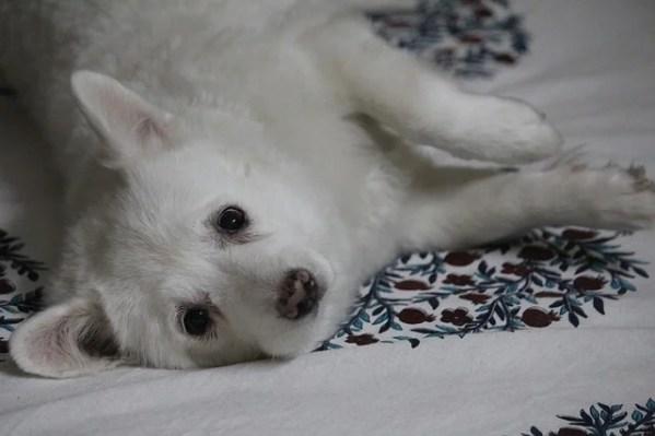 初めて犬を飼ってみて最初から用意ておけばと後悔したモノ~飼う前の参考に
