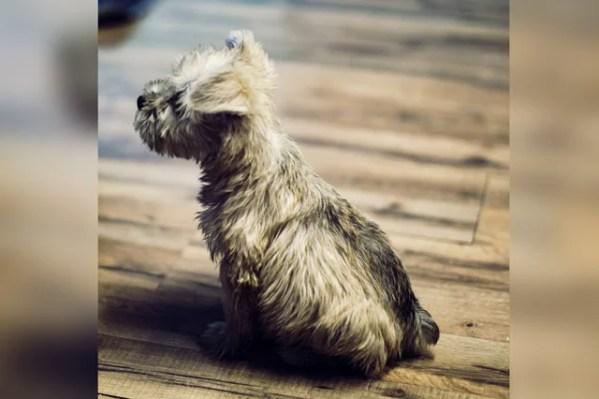 一人暮らしの私が里親として初めて犬を飼ってみて知ったメリットとデメリット
