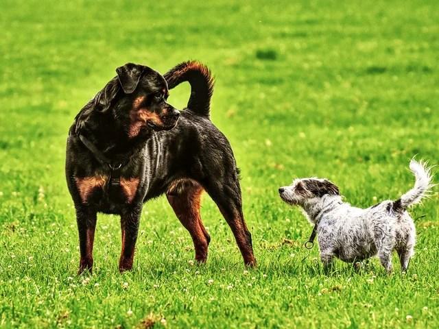 「雑種の犬はかわいくない」「純血種の方がいい」賛否両論の意見多数