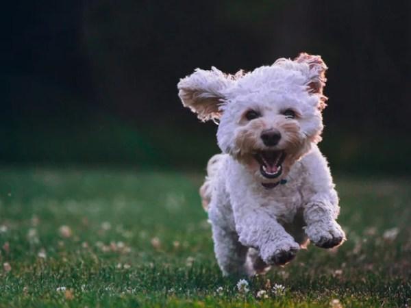 犬の習性や犬の気持ちを知る~犬の飼い主さんが知ってると便利な知識