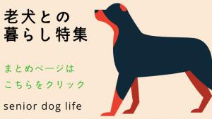 老犬との暮らし特集