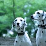 愛犬の健康に無添加ドッグフード