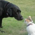 愛犬の長生きと無添加ドッグフードの関係