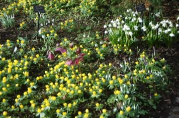 garden-february-2014-0243719