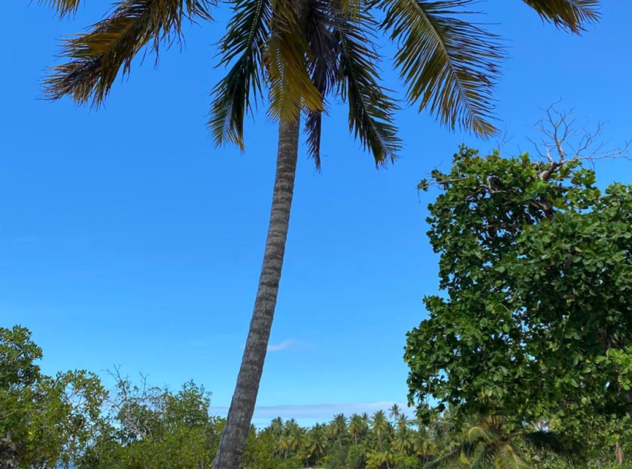 Terreno próximo a la Playa con Altura y Vista 180 Grados, 24,000 Mts2
