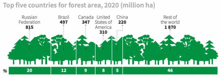 cinco-paises-tienen-el-50-de-los-bosques% - Desforestamos si,  pero menos que antes