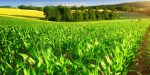 Agriculture projects have to be bankable, says Blanke