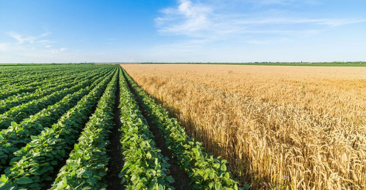 Ativos Produtivos Fazenda