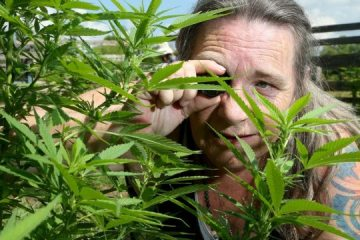 Medical marijuana home-growers rejoice, but will their gardens survive legalization?