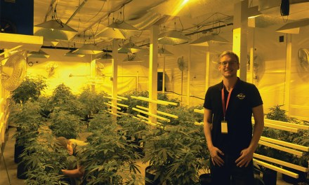 HVAC's Growing Role in the Marijuana Industry