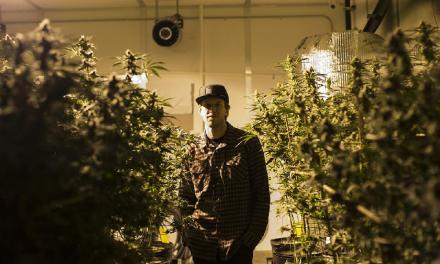 'Pot' growers push to cut costs