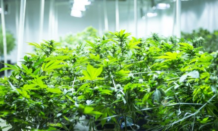 Time for feds to allow marijuana banking