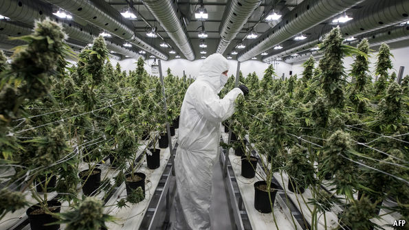 Investing in cannabisThe world's first pot-focused exchange-traded fund – The Economist