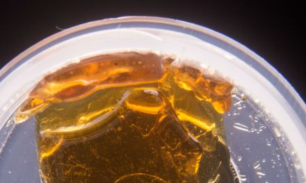 Are You Storing Your Cannabis Concentrates Properly?