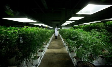 Canada urged to share plans on UN drug treaties as it eyes pot legalization – CTV News