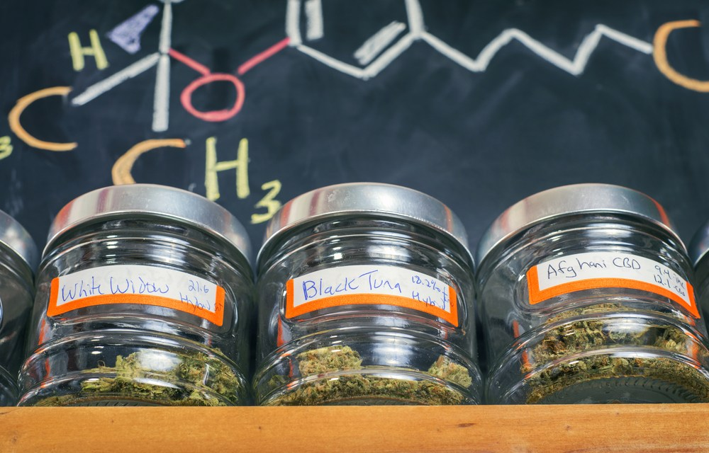 This Canadian Company's App Is Revolutionizing The Way You Choose Cannabis Strains – Civilized