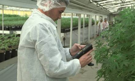 Entrepreneurs bet Canada will be a leader in marijuana technology – The Globe and Mail