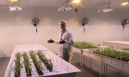 First medical, then recreational: Montreal marijuana plant opens
