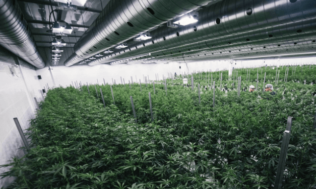 Complete Guide To The Cannabis Industry #2: Production Capacity