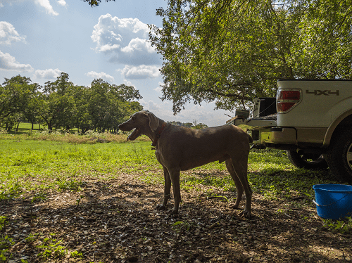 Duke and ford truck