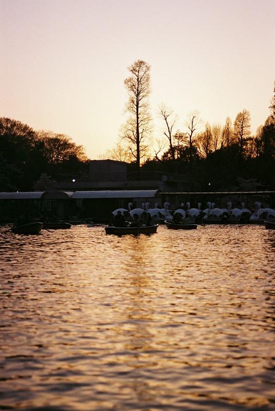 井の頭公園の夕日