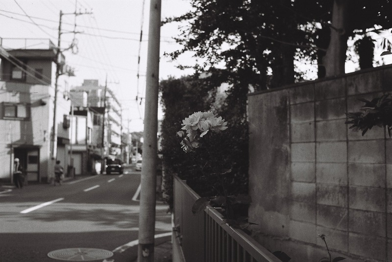 道端で見つけた花