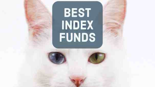 best index funds kitten heterochromia
