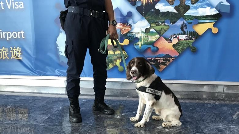 マカオ空港の麻薬犬とセキュリティ