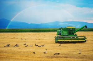 Поддержка начинающий фермер