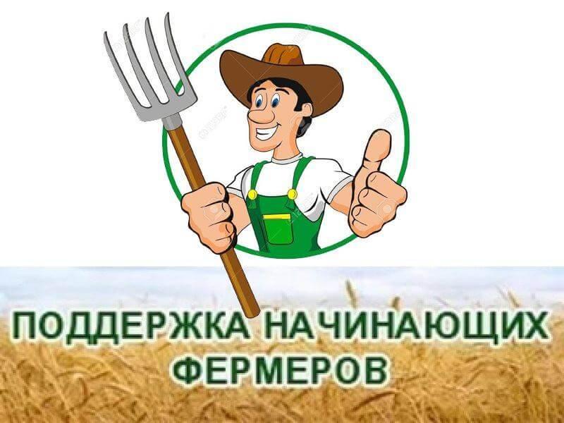 Начат прием заявок начинающий фермер в Татарстане 2019 г