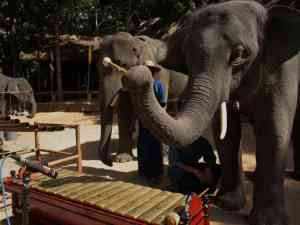 elephant-orchestra
