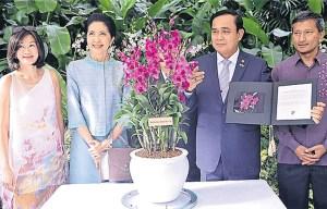 Prayut orchid