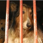 Beware of dog food: The great dog meat debate howls on