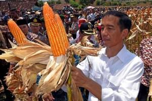 Joko Widodo_corn