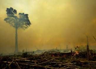 Forest fires cost Indonesia $16 billion, contribute to climate change