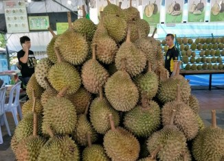 Durian crisis in Malaysia: Prices for the fruit fall as low as to RM1
