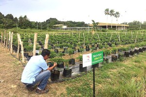 Brunei agripreneurs boost agricultural output by 13%