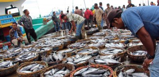 Indonesia Launches First Online Fish Auction Site