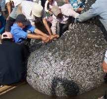 Cambodia fishing