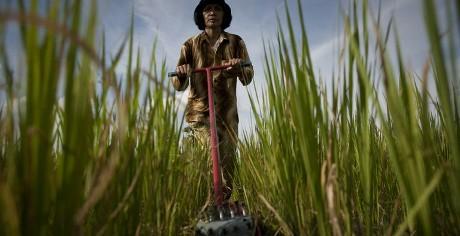 ADB lends Cambodia $70m for reforms