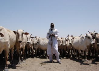 Cattle Herders Kosti Area